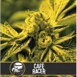 Cafe Racer · Blimburn Seeds