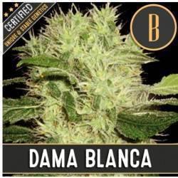 Dama Blanca · Blimburn Seeds