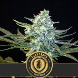 Guanabana · Blimburn Seeds