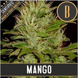 Mango · Blimburn Seeds