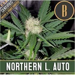 Northern Lights Auto