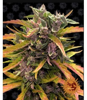 GORILLA GLUE AUTO · Barneys...
