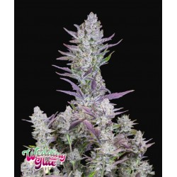 Wedding Glue Auto ·...
