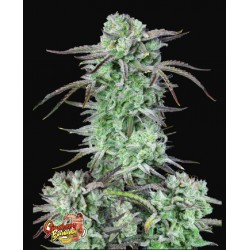 Strawberry Banana Auto ·...