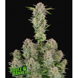 Bruce Banner Auto ·...