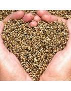 Comprar sementes de maconha